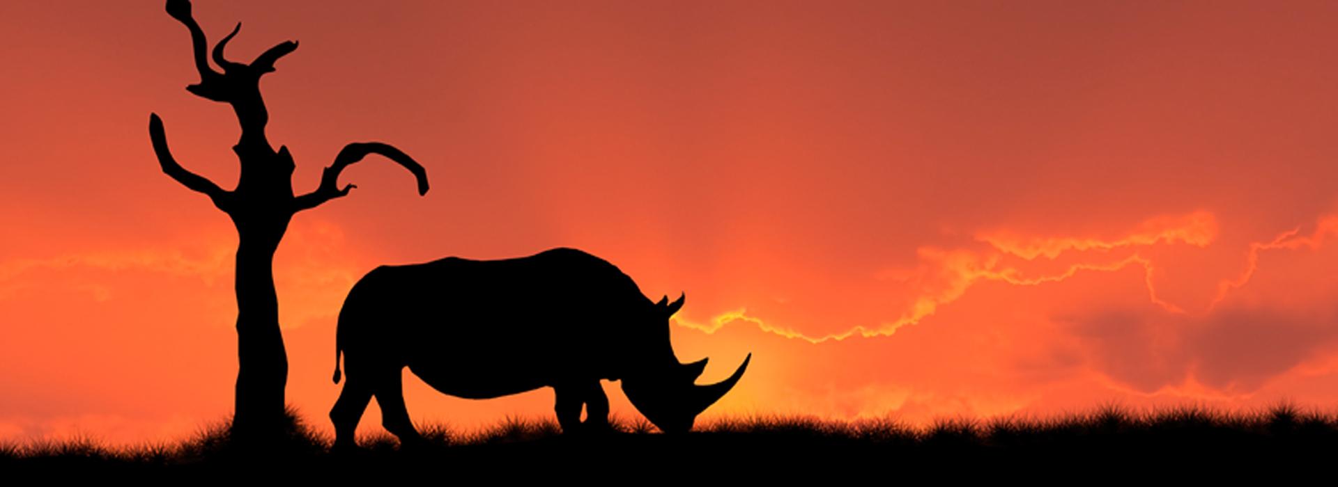 rhino_at_sunset