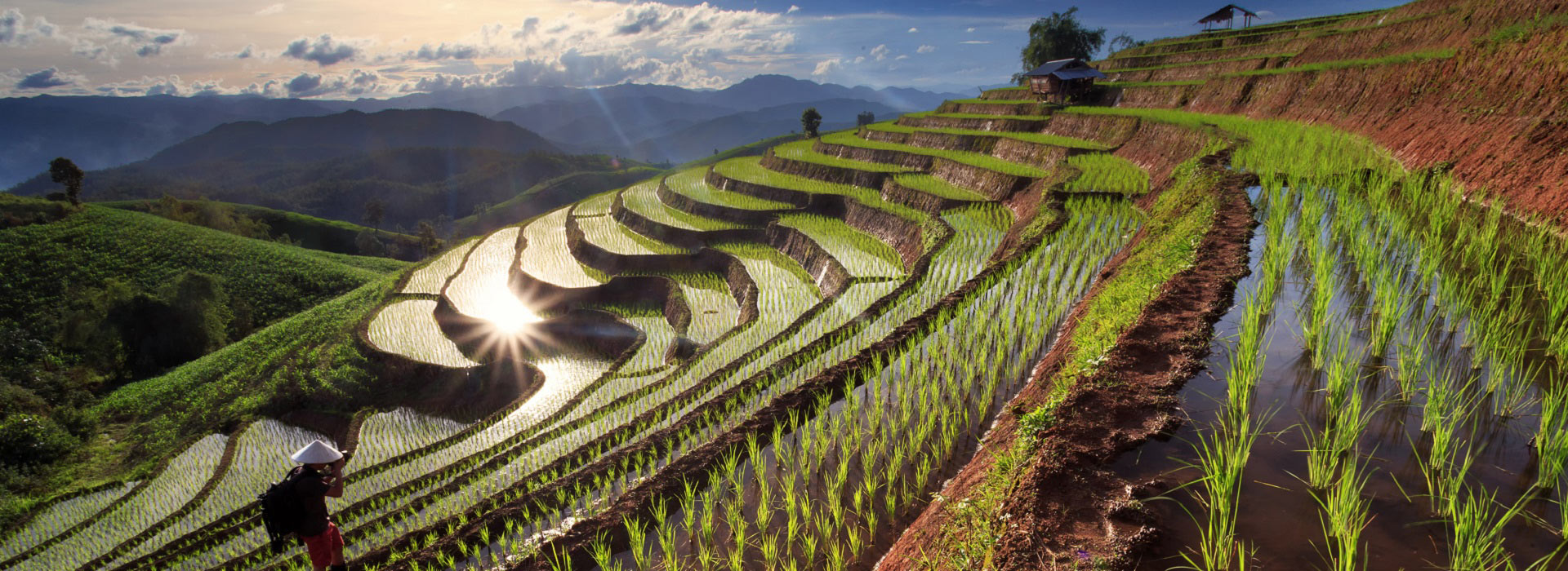 rice_fields_on_terraced_at_chiang_mai
