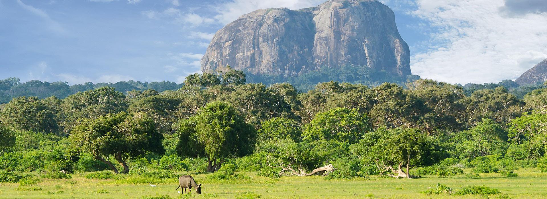 yala_national_park