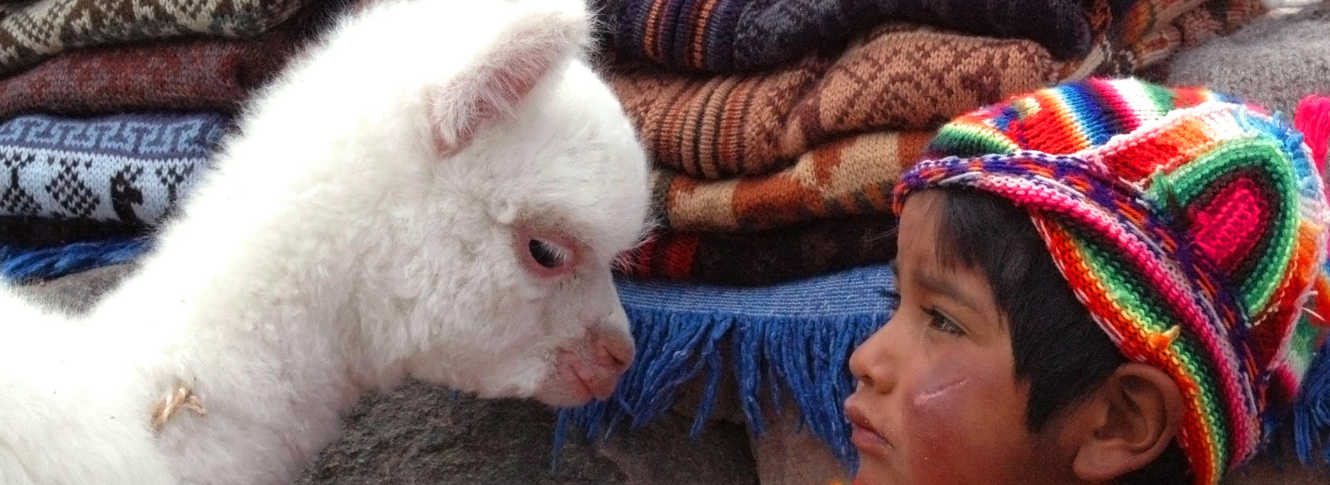 Unidentified Quechua little boy in traditional clothing with baby llama in Arequipa