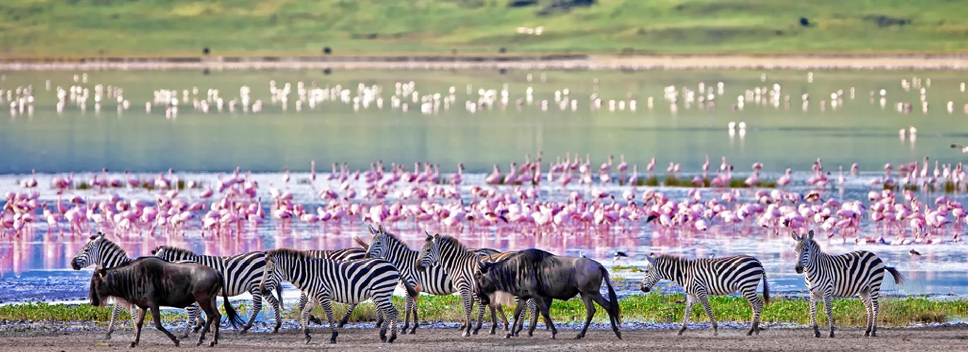 pozza-d'acqua-nel-cratere-ngorongoro