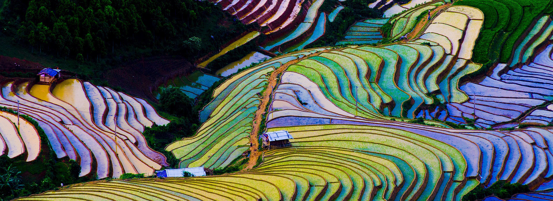 terraced_rice_field_mu_cang_chai