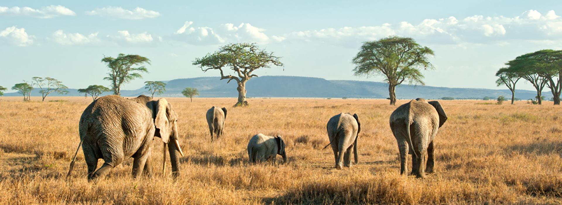 elefanti_zanzibar