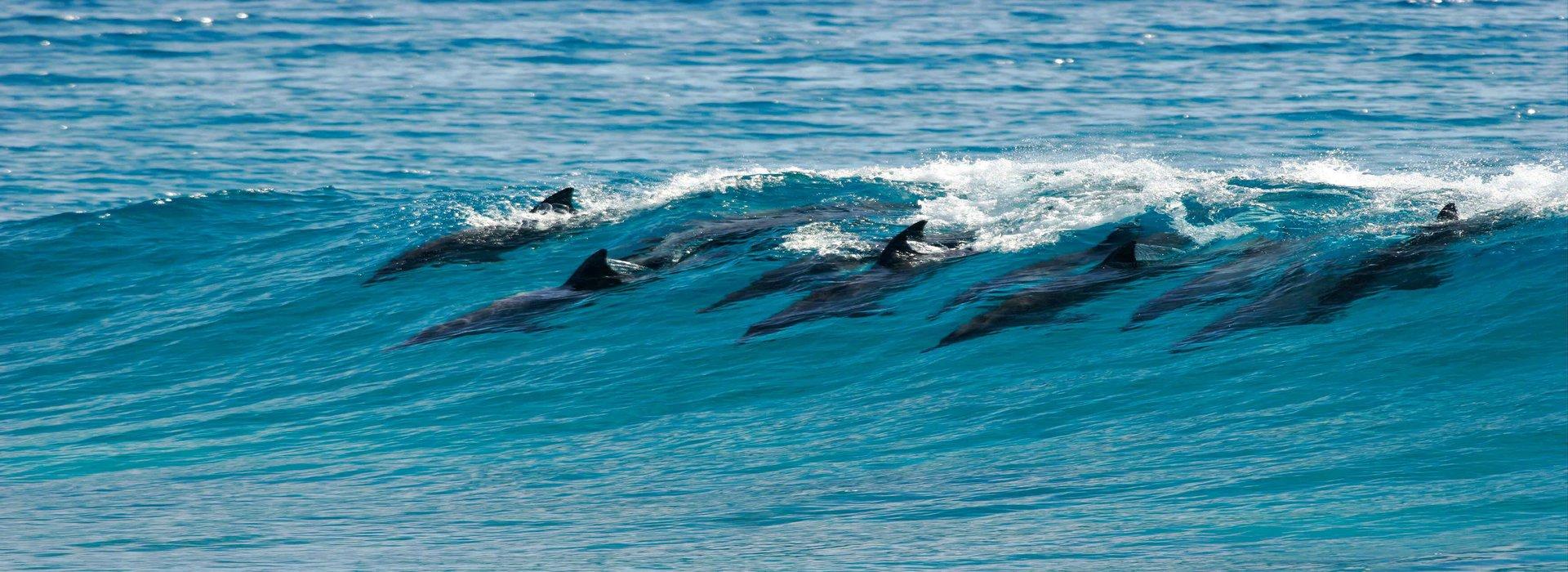 magnifici_delfini_in_gruppo