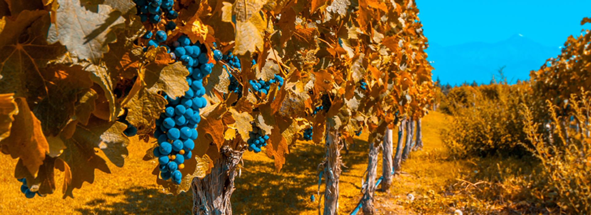 Vineyards-of-Mendoza,-Argentina
