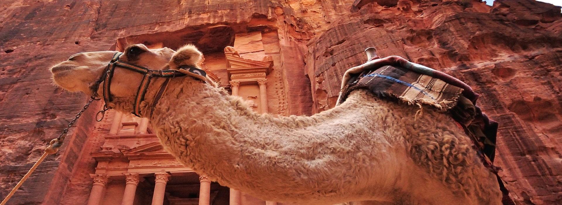petra_camel