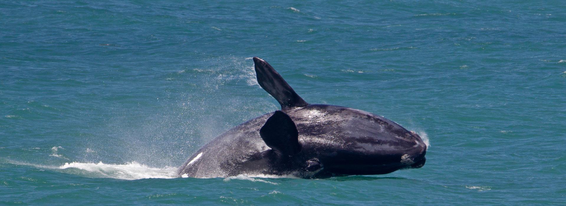 il_salto_della_balena