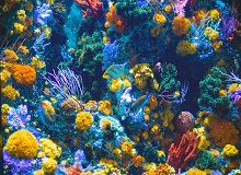 belize_barrier_reef