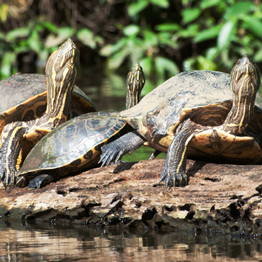 Tortuguero National Park | Top 5 Costa Rica