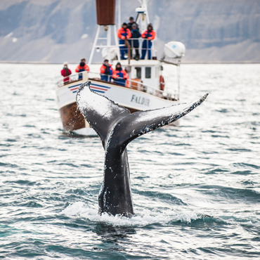 Whale watching | Top 5 Norvegia