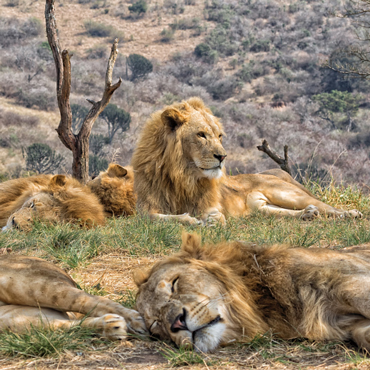 Safari Kruger NP | Top 10 Sudafrica