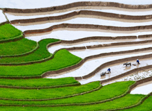 Rice Terrace Sapa